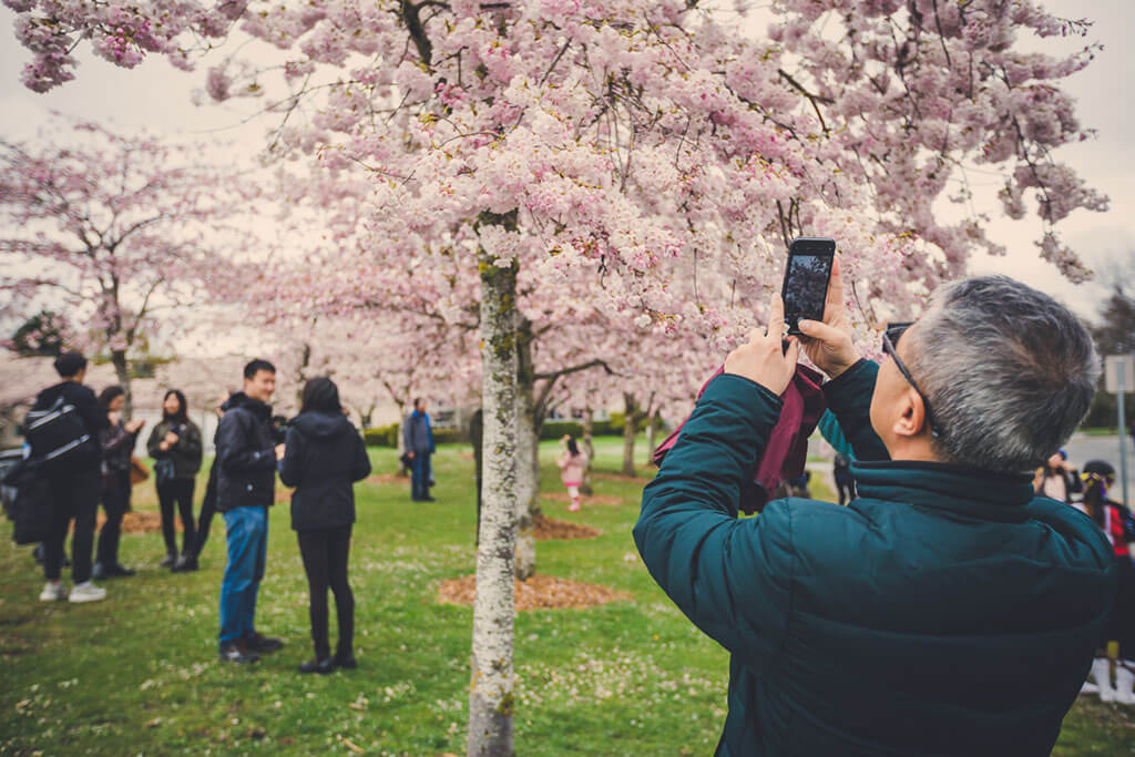 A man takes a photo of the blossoms on his phone