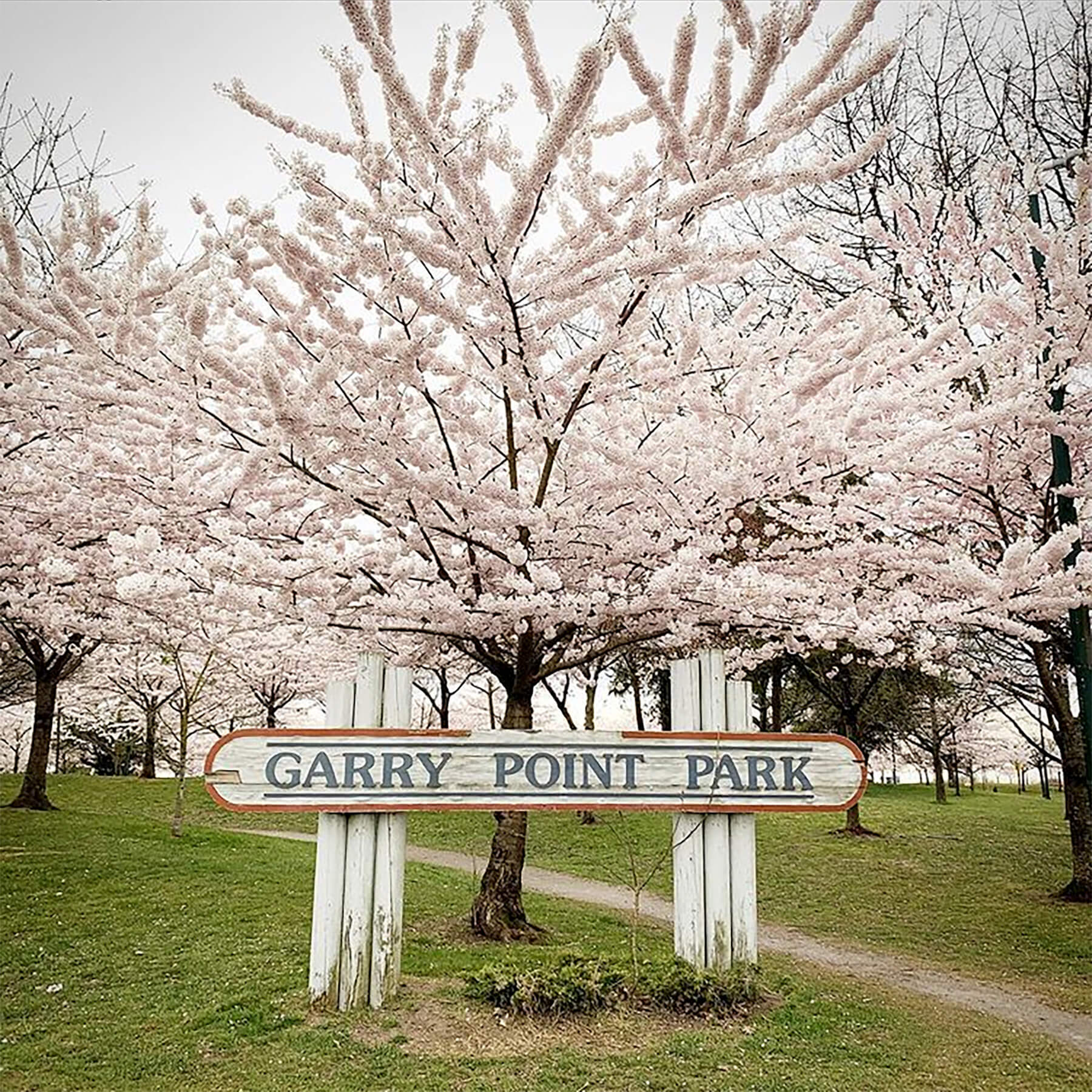 Photo of the Garry Point Park sign with cherry trees in bloom behind it.