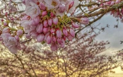 April 8: Photo by @lolabansiang
