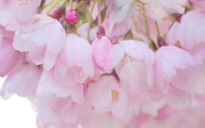 April 3: Photo by @tea_drinks_tea
